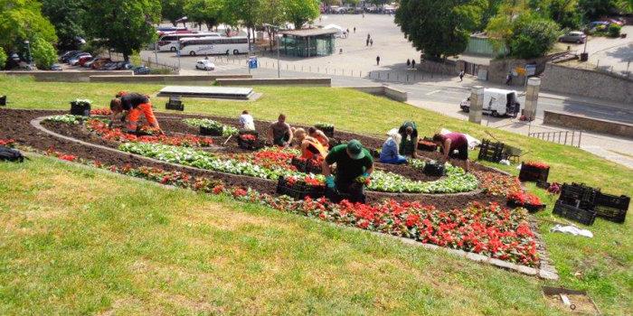 Einige Mitarbeiter Des Garten  Und Friedhofsamtes Sin Dabei Eine Fläche In  Der Form Des Erfurter